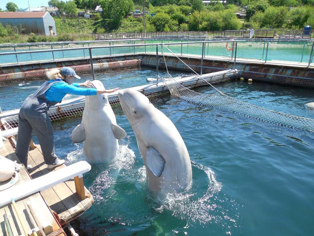 Дельфинарий в бухте Средняя