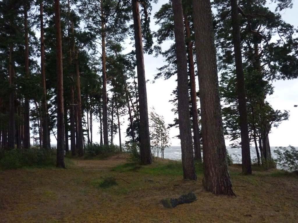 Берег Финского Залива в Зеленогорске