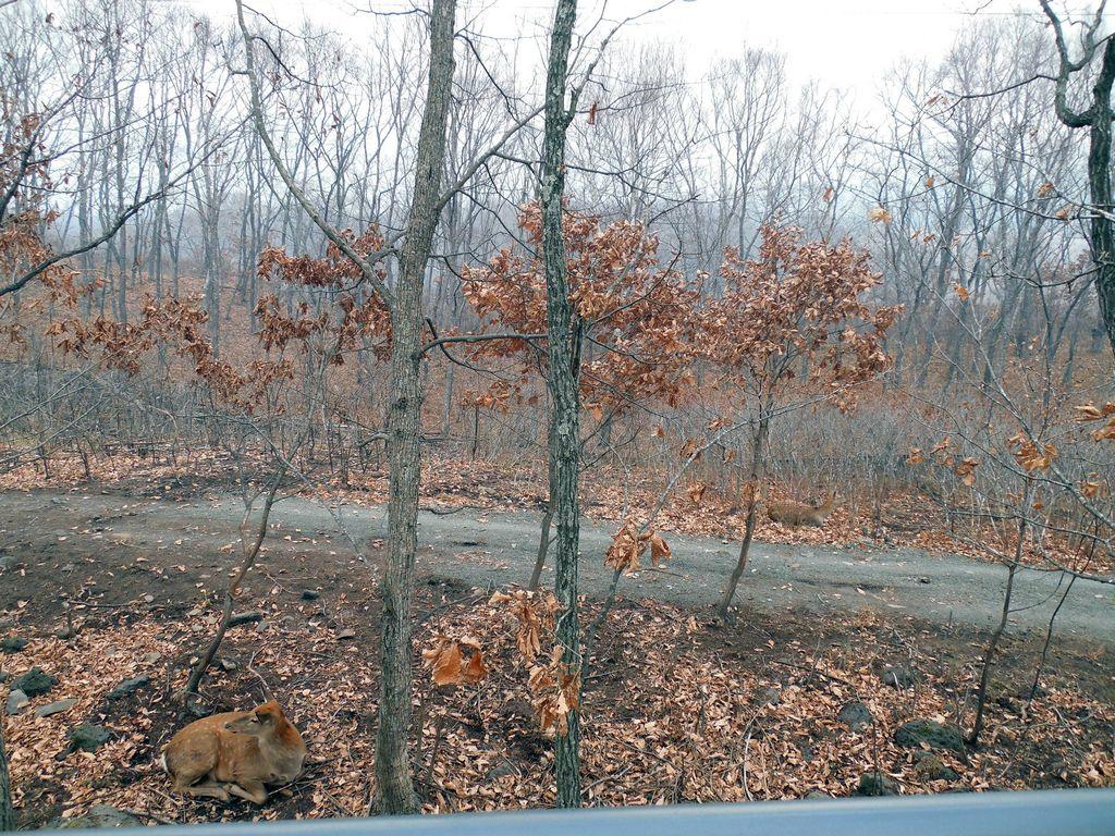 Сафари парк в Шкотово осенью