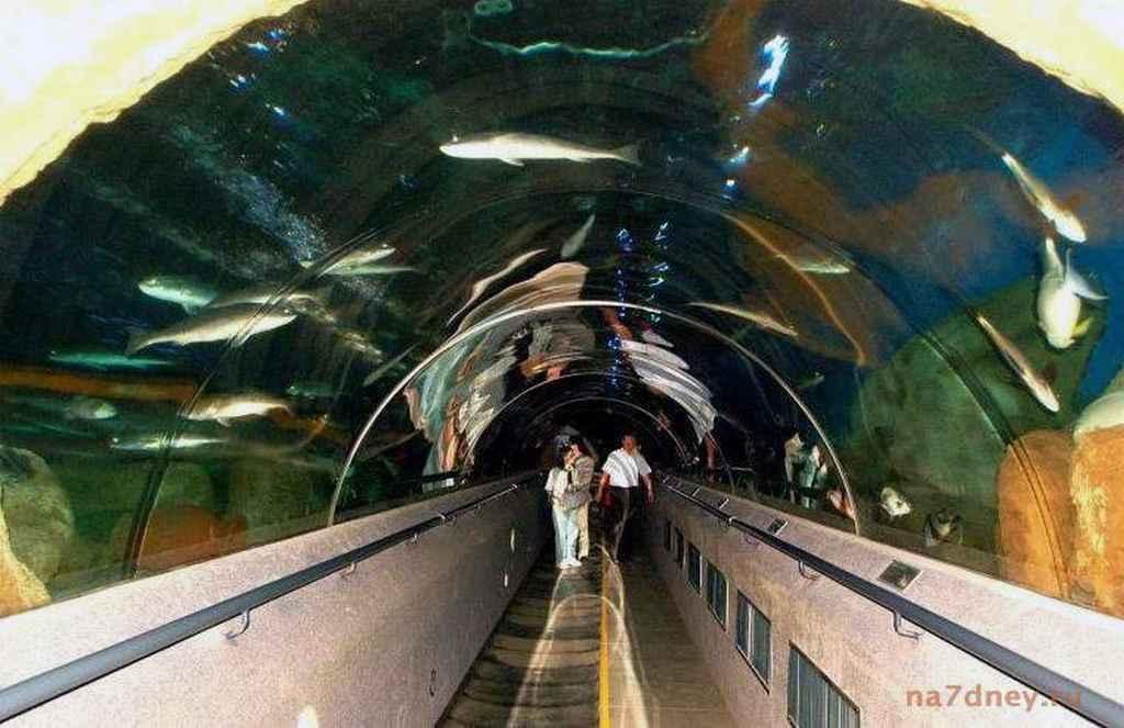 тоннель через аквариум в Даляне